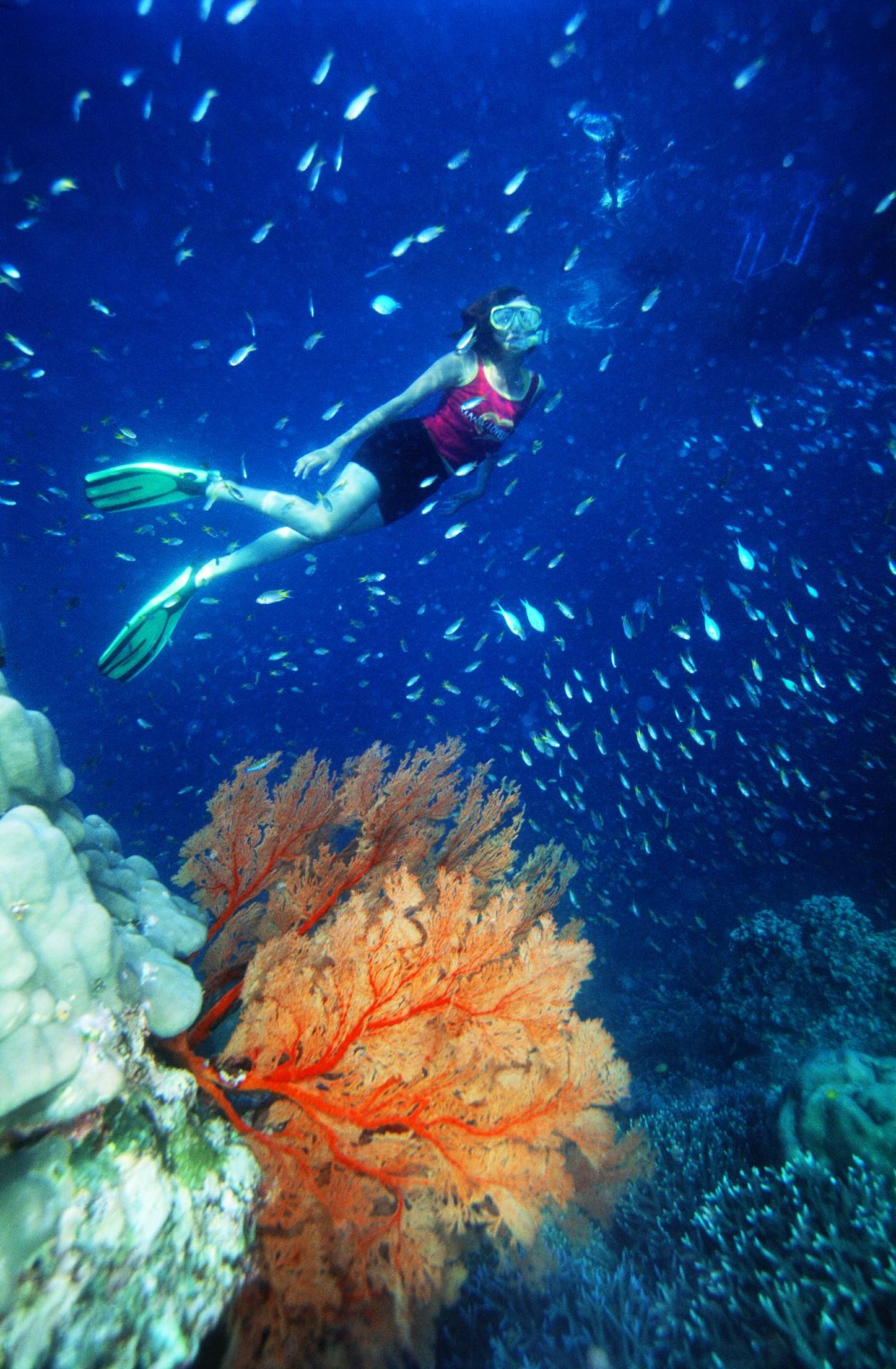 Diving in Phang-Nga