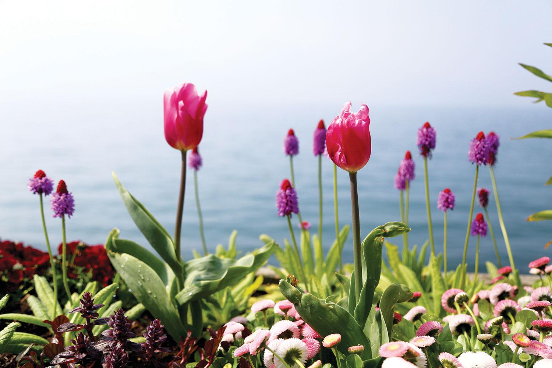 Swiss Riviera: Pure Inspiration