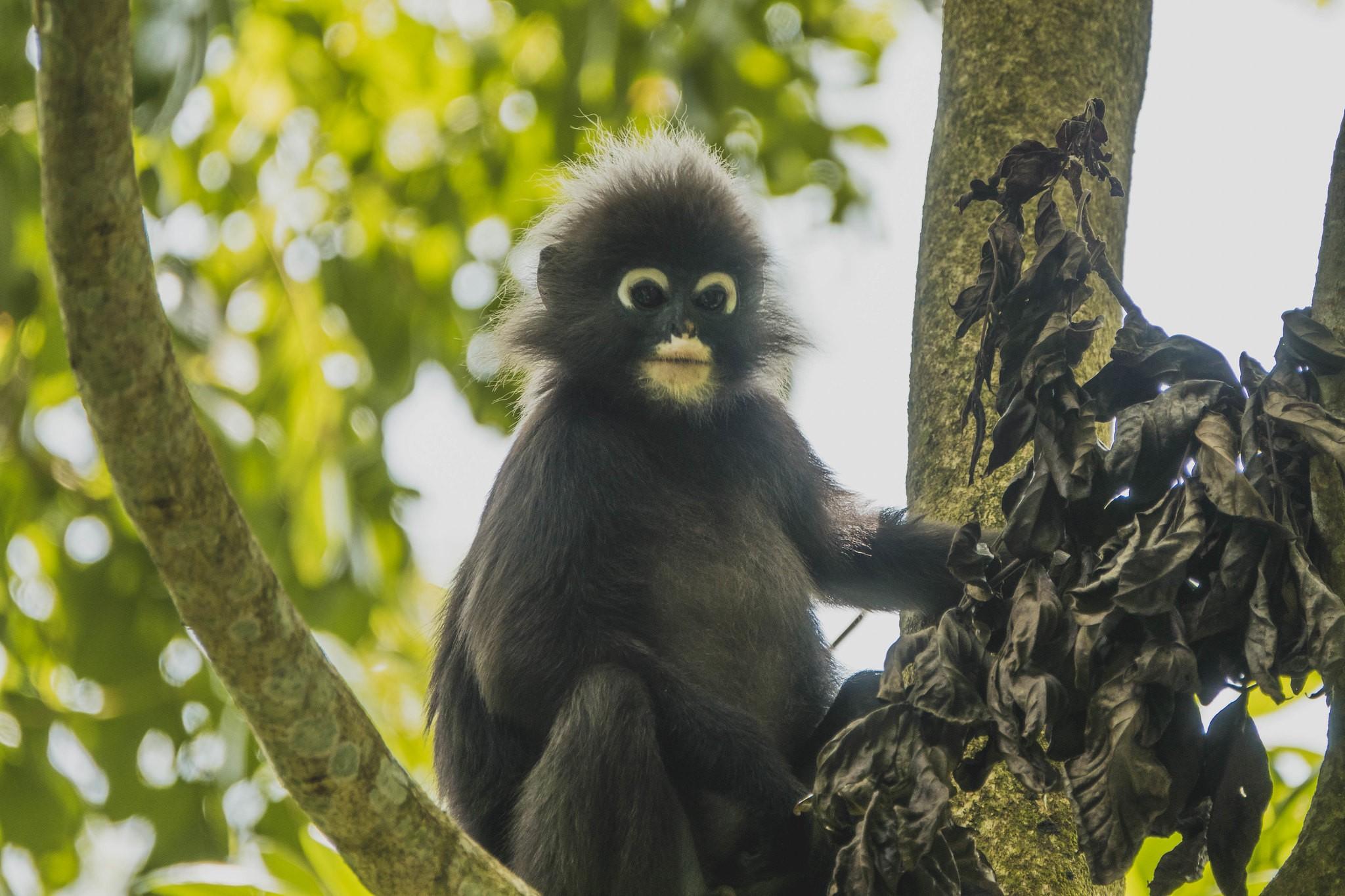 The Habitat Penang Hill: Diverse Rainforest Experience