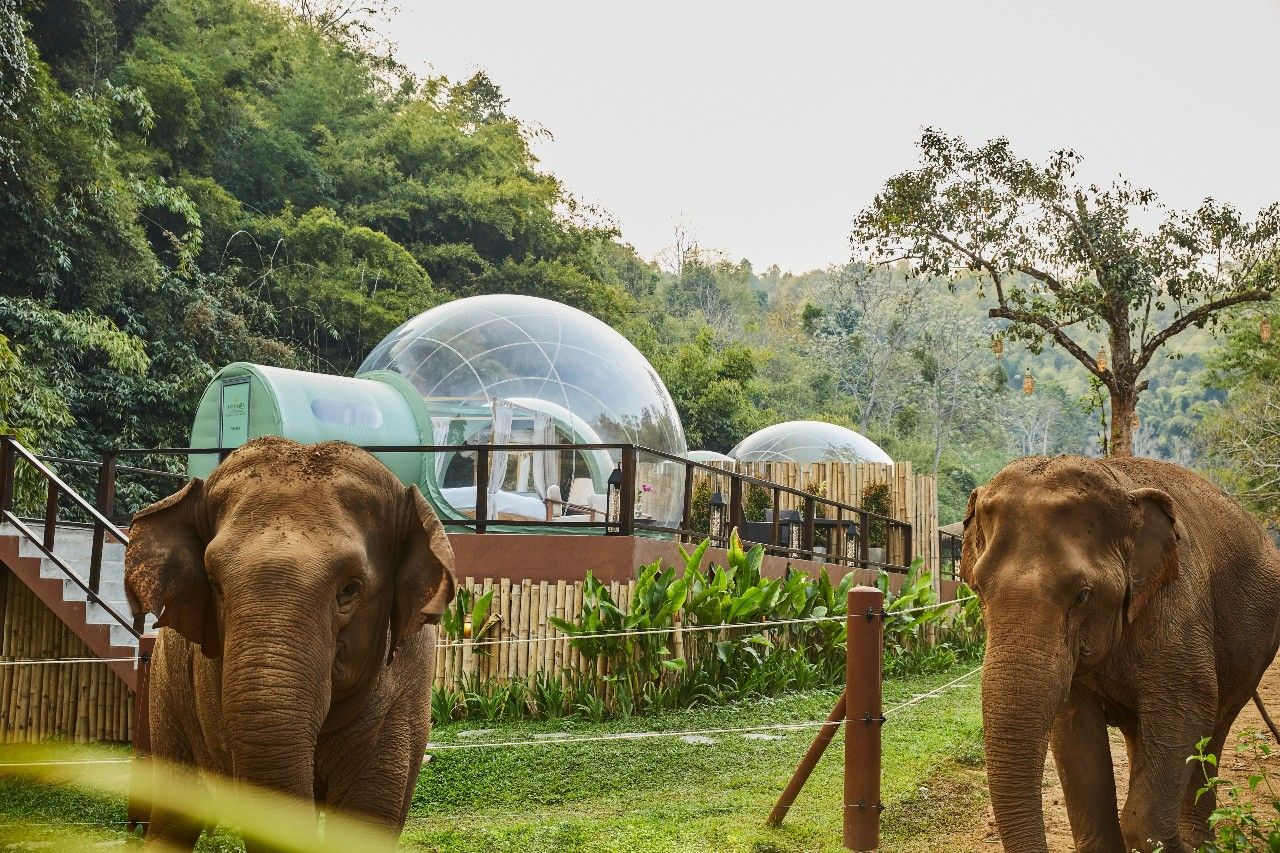 Anantara Golden Triangle Elephant Camp & Resort: Discover The Golden Triangle In Style And In Depth